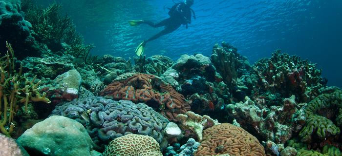 Palau - nurkowanie